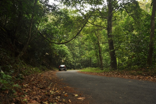 An example of a good forest road, used even by trucks and buses, with unbroken canopy over the road. Photo: NCF