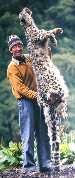 Snow leopards are sometimes killed in retaliation when they prey on livestock