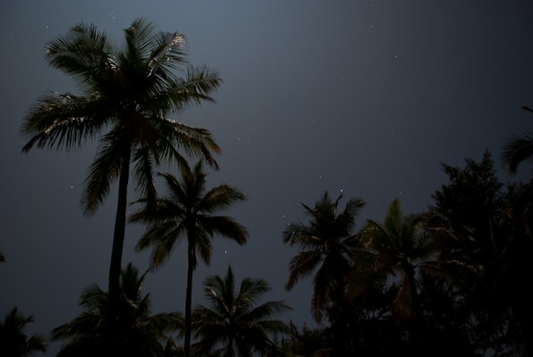 Coconuts and moonlight