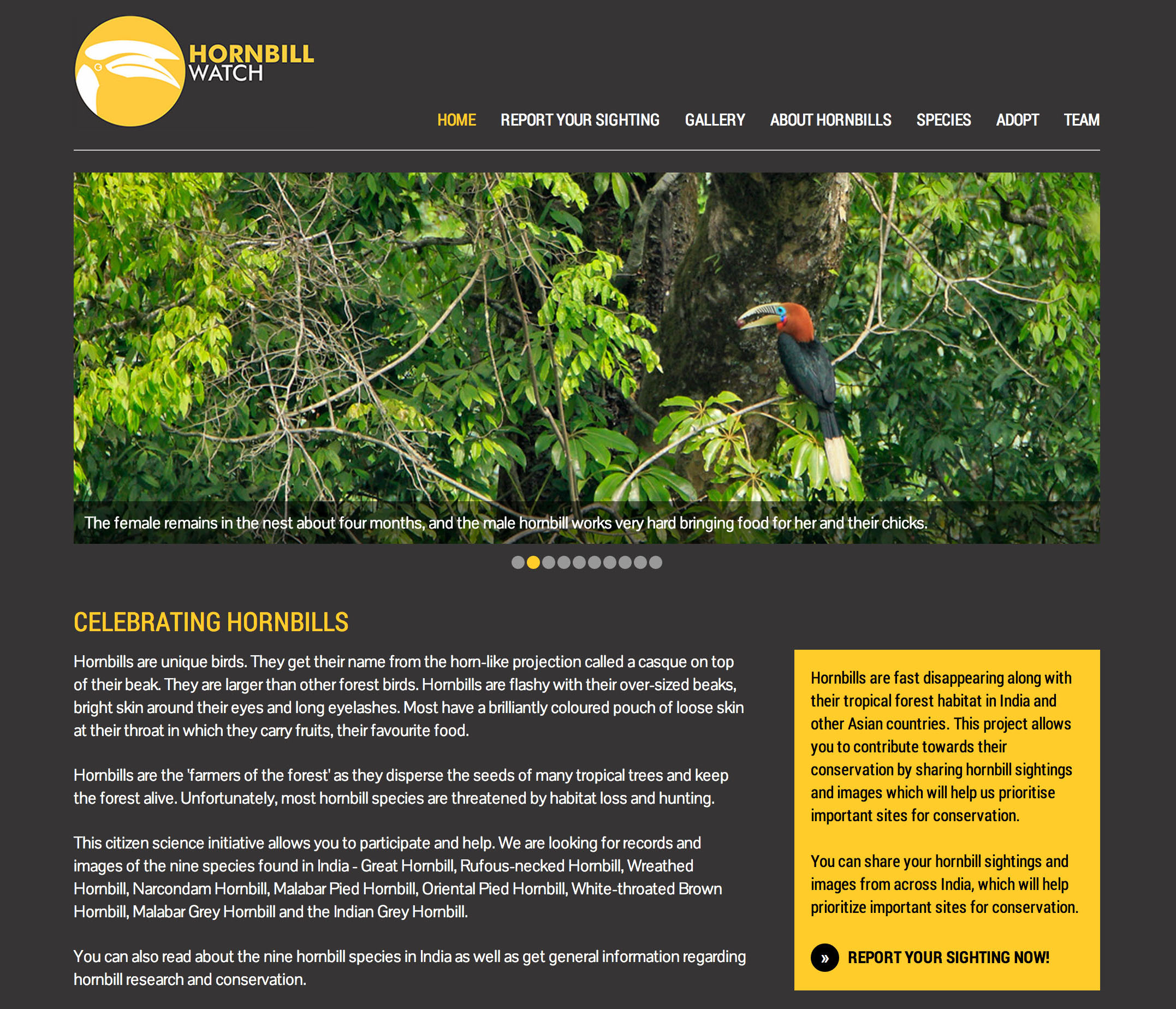 hornbill watch for website