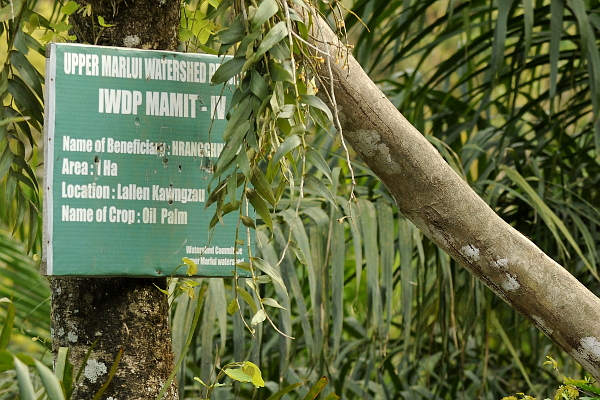 Converting secondary forests and shifting agriculture to oil palm is a travesty of watershed management.