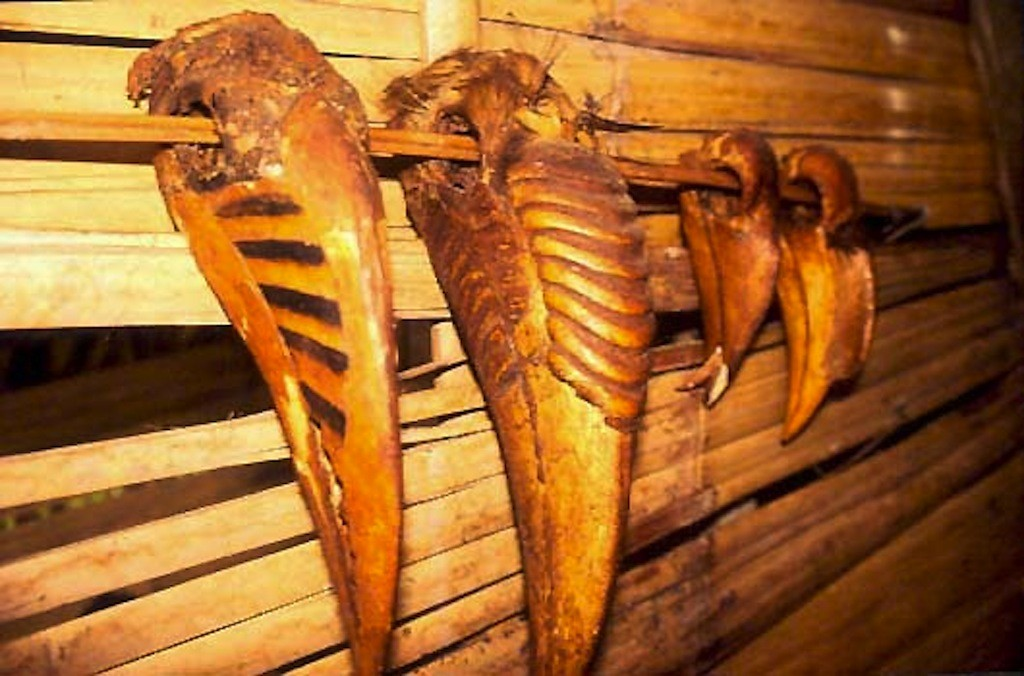 hornbillheads in a Tanga house