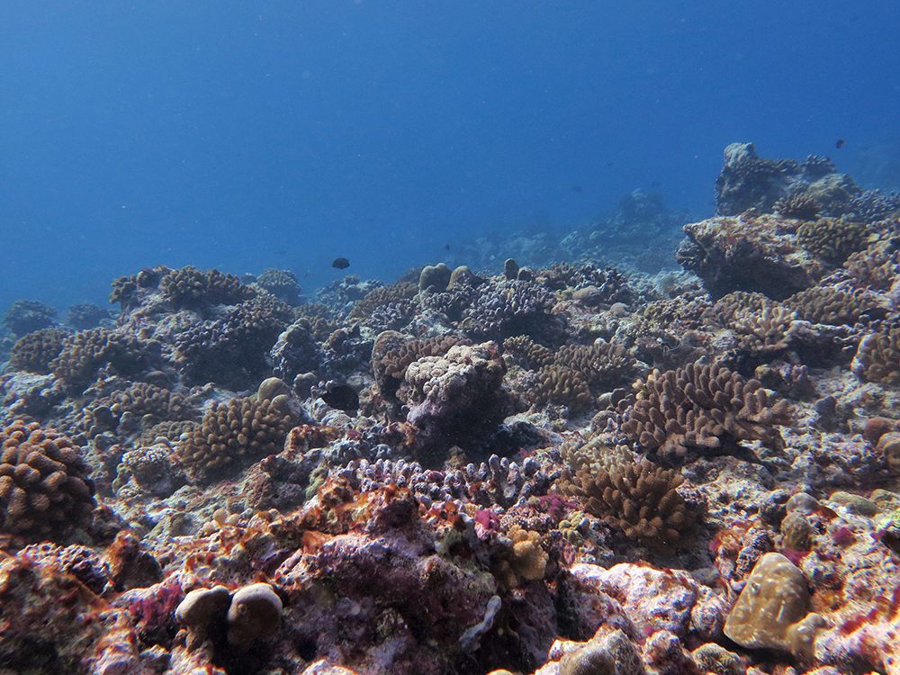 Recovering reef