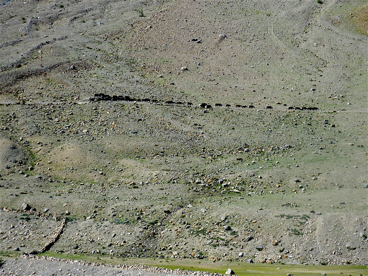 The Gaddis and their sheep and goats are a common sight in the summer months in this harsh landscape.
