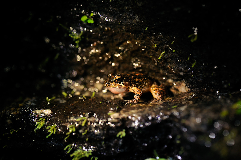 A Frog on the forest floor. Photo: Kalyan Varma